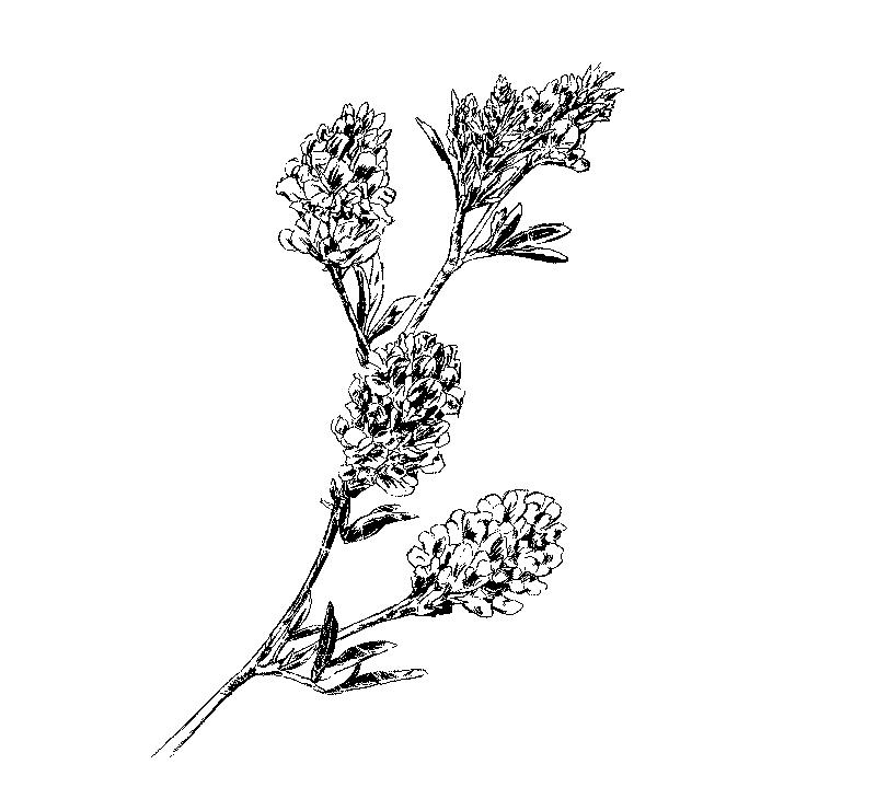 Wein 6 Symbol