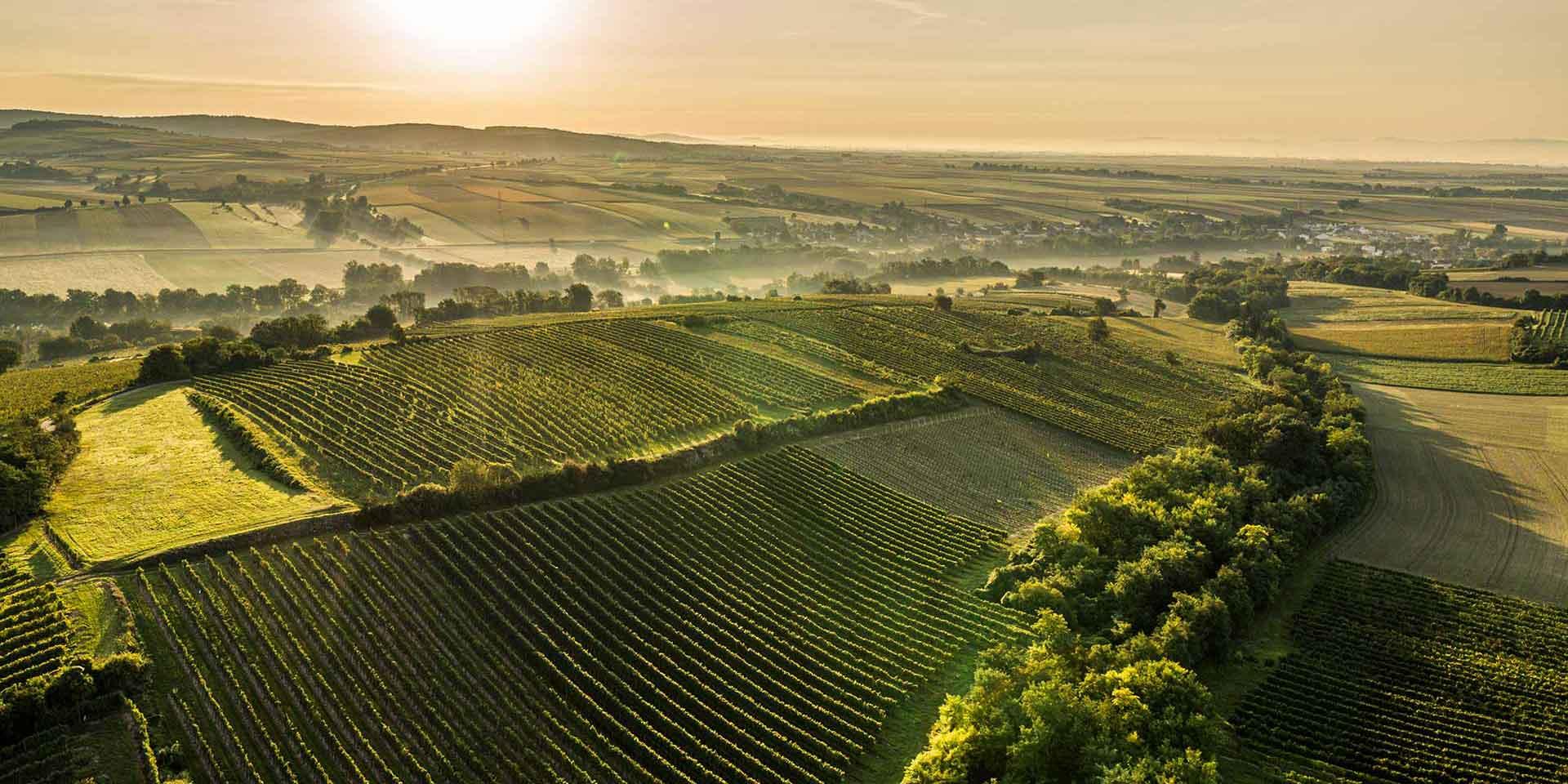 """Der Wagram wurde als Weinbaugebiet """"geboren"""". Das pannonische Klima verwöhnt den Wein mit Tagen voller Sonne und führt ihn in kühlen Nächten zur Eigenständigkeit. So bleibt Wein in Erinnerung."""