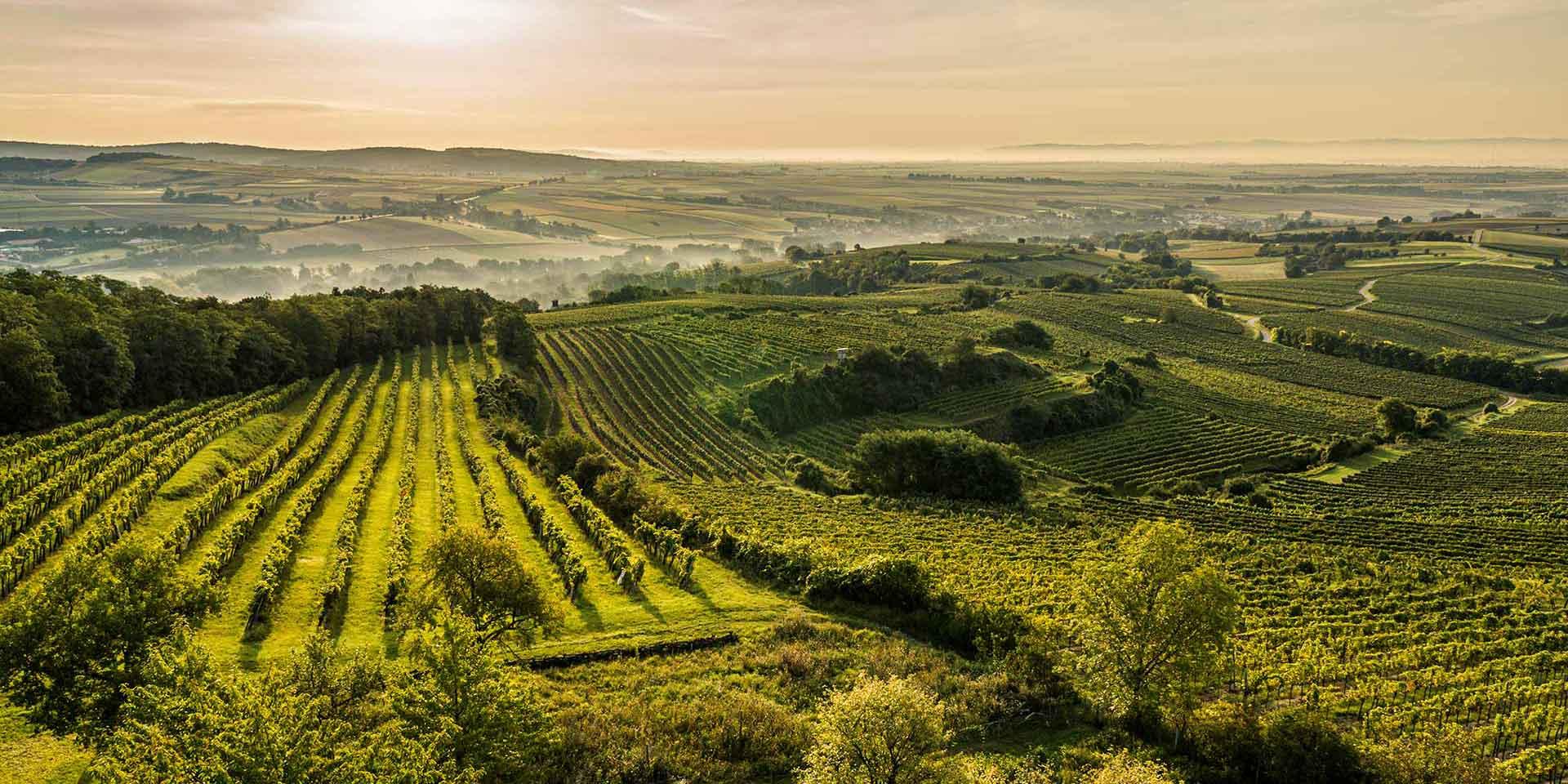 Einzigartig. Das ist das Weinbaugebiet Wagram. Der Boden ist reich an Fossilien und Mineralien. So bekommt unser Wein Charakter.